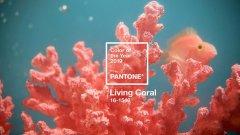 年终奖被安排了,彩通宣布2019年流行色是活珊瑚色